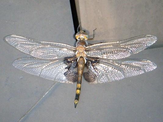 Pre-Tri Dragonfly