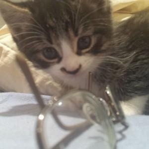 kittens make messes
